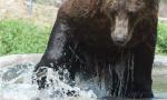 都热懵了吧?看看秦皇岛动物园呆萌动物的花式避暑大法