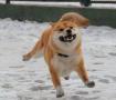 在下雪天的狗子