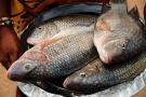 这种鱼非洲不让吃了?