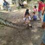 男子手刃7米长巨蟒