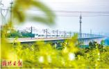 镜头下高铁沿线的美丽风光:绿树掩映高铁线