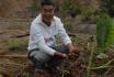 即墨白庙芋头丰收 600年种植史卖出猪肉价