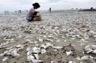 大量海鲜被冲上海滩