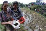 这个县在稻田里养鱼蟹,去年让2.5万人脱贫了