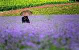 超大草坪、四季花海!白马湖二期明年4月惊艳亮相