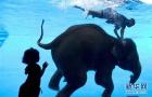 水中骑象表演