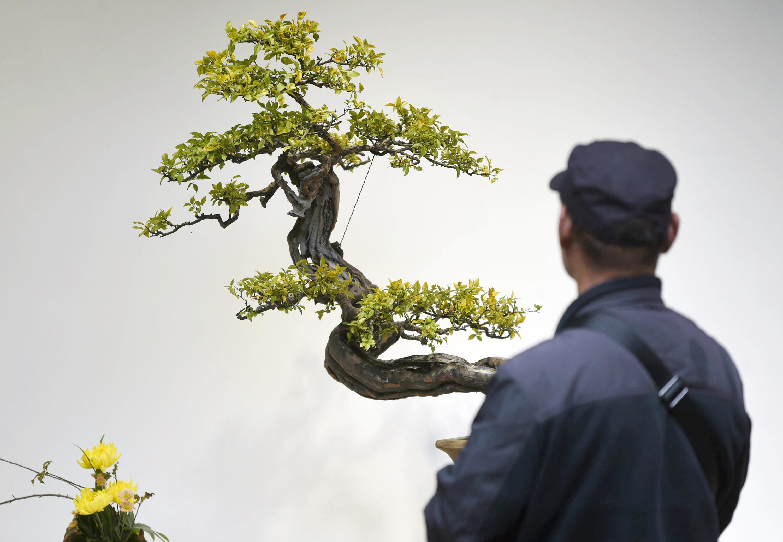 杭州举办2017浙派盆景作品展