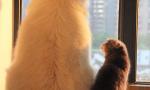 猫和狗谁的智商最高?喵星人已哭晕在猫架上