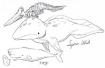 与远古对话的人:从古代海洋和恐龙的故事开始