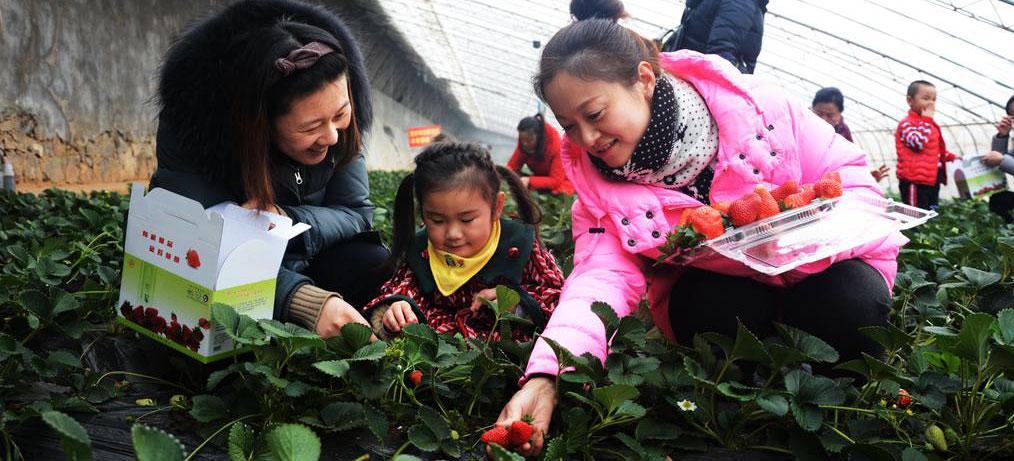 为何淄博这里1亩山地收入7万多元?