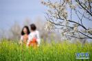 阳春三月乐享春光