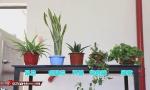 植物能吸收甲醛?