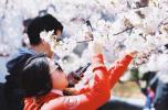 2018中国大连(旅顺)国际樱花节开启东北最美的春天(组图)