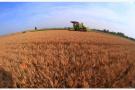 夏季小麦 开机收割