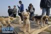济南推养犬计分制:扣满12分犬主需参加学习班