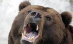 俄罗斯:多地林火 野生熊出没居民区