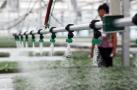 临淄:科技育苗助力增产增收
