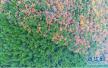 """48万亩原始森林 济源森林公安每天""""巡山""""守护绿水青山"""