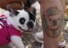 宠物犬伤人事件频发生 不文明养犬现象何时终结?