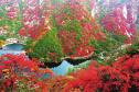 河南嵩县:漫山红叶绘出金秋美景图
