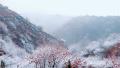 今日立冬 郑州的首场雪已飘下
