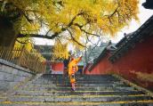 初冬的少林寺是一抹动人心魄的美