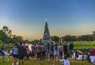 巴西43米高圣诞树
