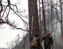 元凶找到了!凉山火灾专案组三天查万棵树确定雷击点 4名民警受伤