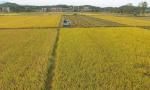机器来种地 农民去干啥?