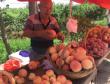 老伴患癌需化疗六旬桃农急卖桃:烂在地里太可惜