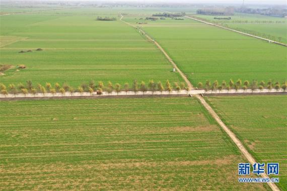 河南许昌:俯瞰绿色麦田