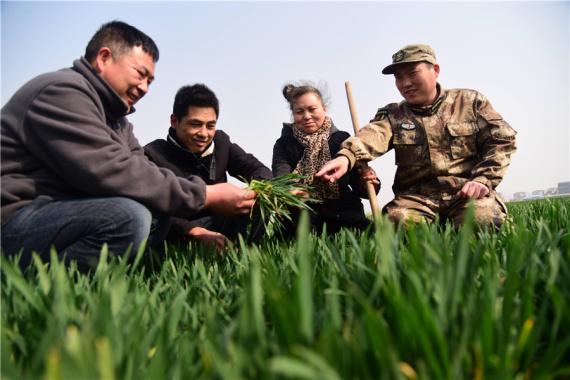 河南杞县:小麦春管正当时 民兵帮扶到田间