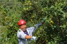 河南光山:种植油茶促民增收