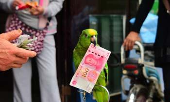 一岁鹦鹉能辨别纸币