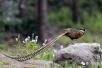【生態微山】微山湖鳥趣