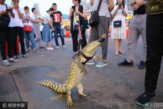 瀋陽一攤主街頭霸氣遛鱷魚 製作鱷魚串引圍觀