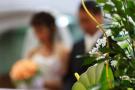 """婚车数量鲜花销量暴增 鞍山500多场婚礼响应""""我爱你"""""""