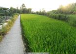 豐縣科技鎮長團促成四項農業科技成果落戶