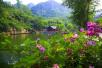 蔷薇团簇!端午节山东人的小长假被这里承包了