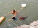 大公鸡陪主人游泳健身