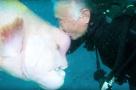 潜水员与海底一条大鱼结下25年的深厚友谊