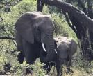 马云命名非洲象为杭州