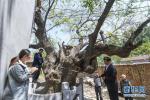 《山东省古树名木保护办法》自7月1日起施行
