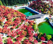 重庆五洲园红枫林美翻天