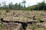 黑龙江中西部出现旱情 农业部门紧急应对