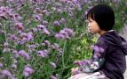 那一片紫色的花海