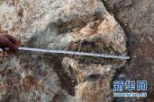中国发现了地球上最古老的足迹