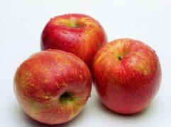 苹果期货价格并未转冷 郑商所多次提示风险