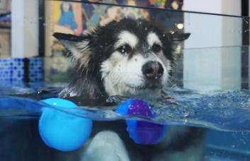 宠物狗游泳208元