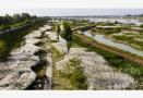 中外专家点赞南京海绵湿地公园:与美国同类公园比,毫不逊色
